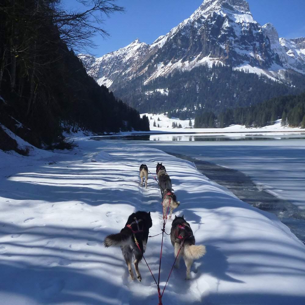 Vorschaubild zu Fischer Adventures - Husky Abenteuer und Schneeschuhtouren