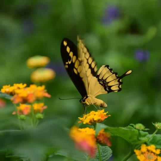 Vorschaubild zu Papiliorama, Nocturama, Jungle Trek