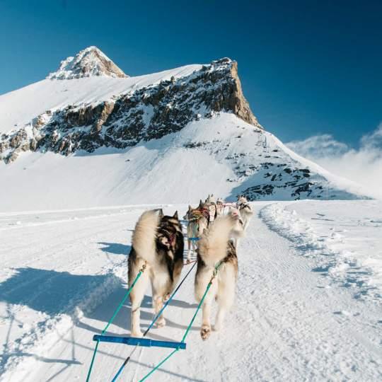 Glacier 3000 Gstaad 10