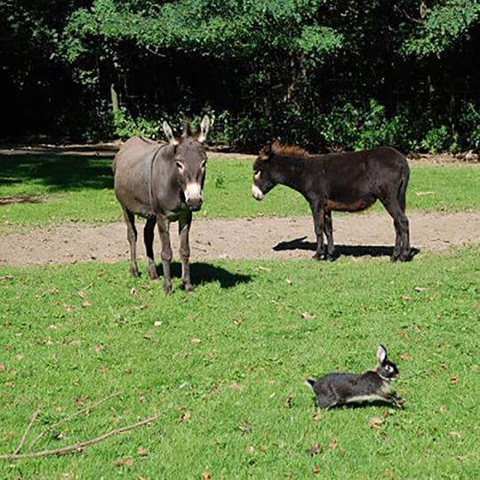 Vorschaubild zu Tierpark Stadt Haag