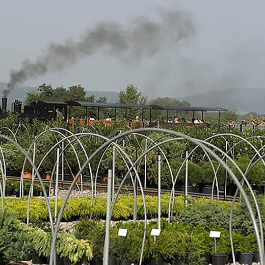 Vorschaubild zu Garten- und Bonsaicenter Zulauf - Die grüne Quelle