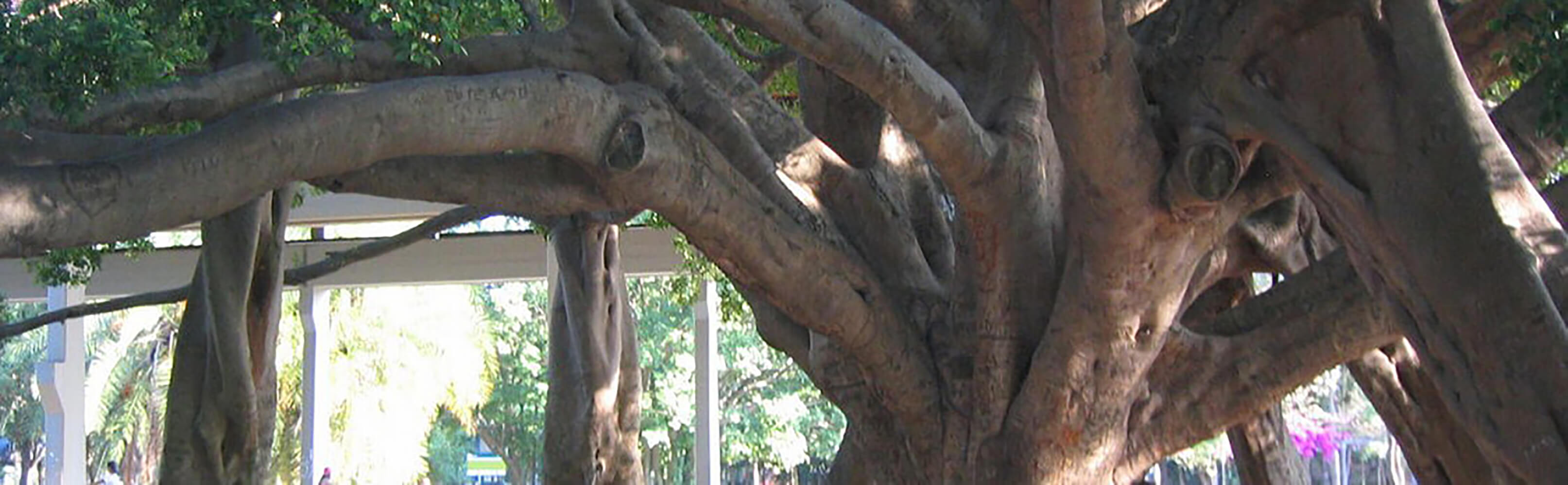 Parque do Ibirapuera 1
