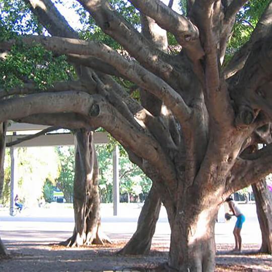 Vorschaubild zu Parque do Ibirapuera