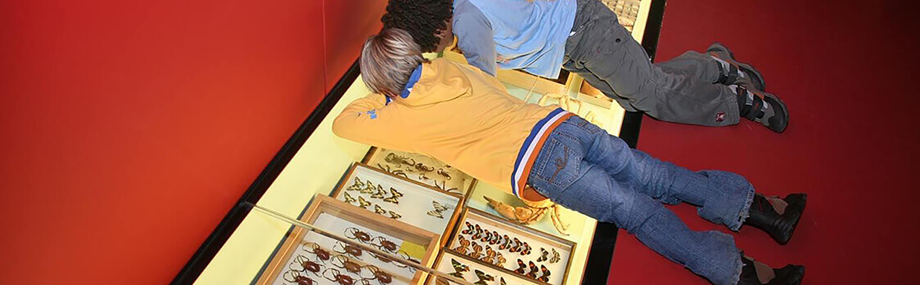 Naturhistorisches Museum der Burgergemeinde Bern 1