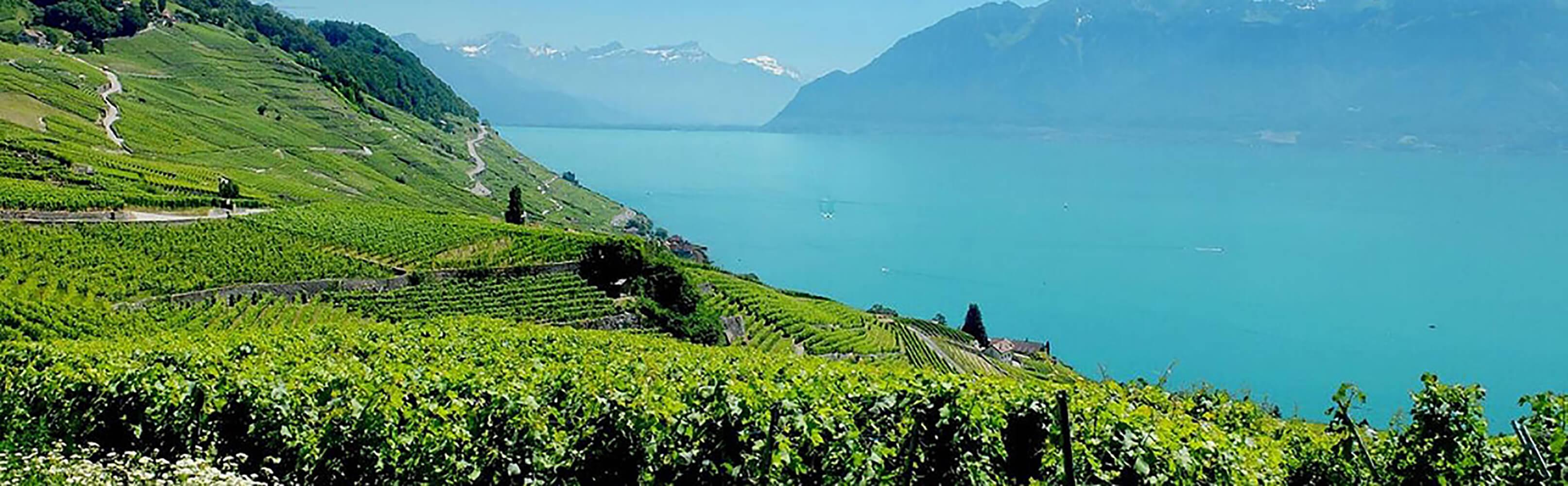 UNESCO-Weinterrassen von Lavaux 1