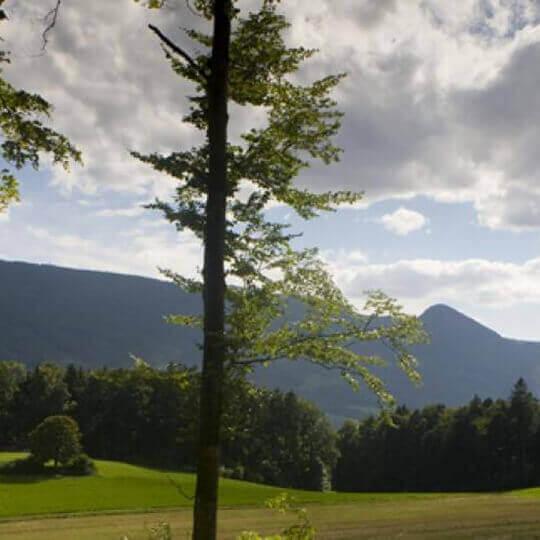Naturpark Thal 10
