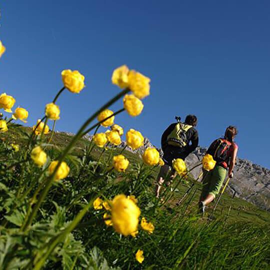Val di Fiemme - Ihr direkter Zugang zu den Dolomiten