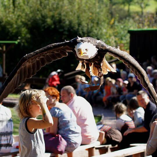 Vogelpark Steinen 10