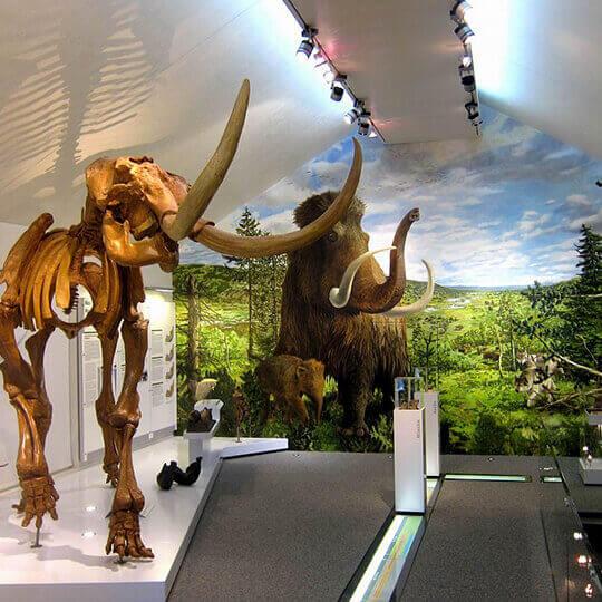 Mammutmuseum Niederweningen 10