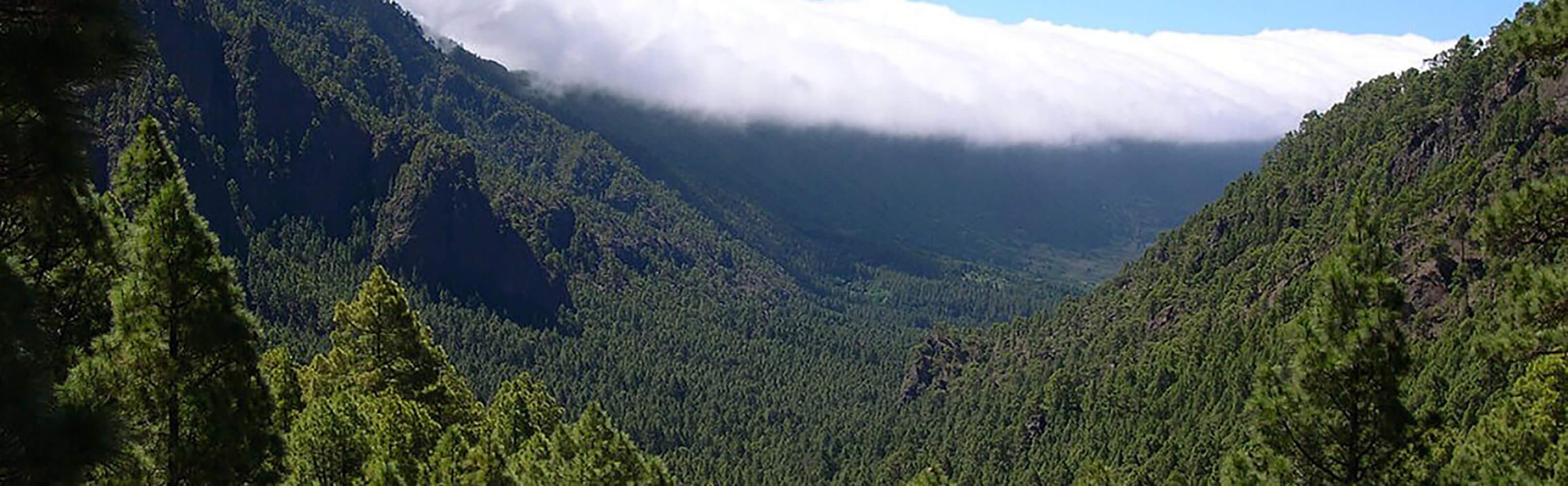 La Palma 1