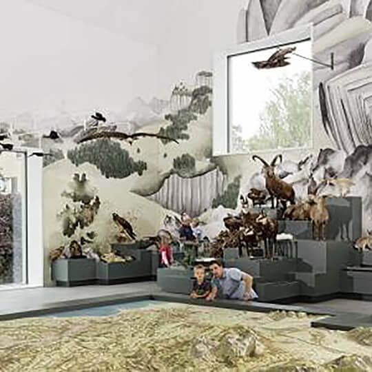 Vorschaubild zu Naturmuseum St.Gallen