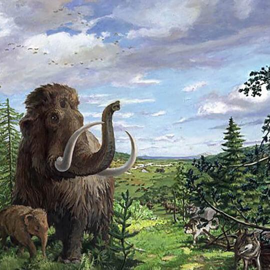 Vorschaubild zu Mammutmuseum Niederweningen