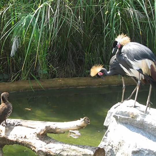 Vorschaubild zu Jurong BirdPark