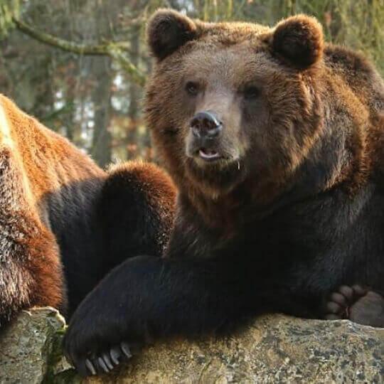 Wild- und Freizeitpark Allensbach – Naturpark am Bodensee 10