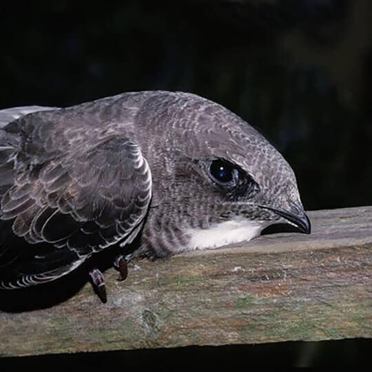 Vorschaubild zu Schweizerische Vogelwarte Sempach
