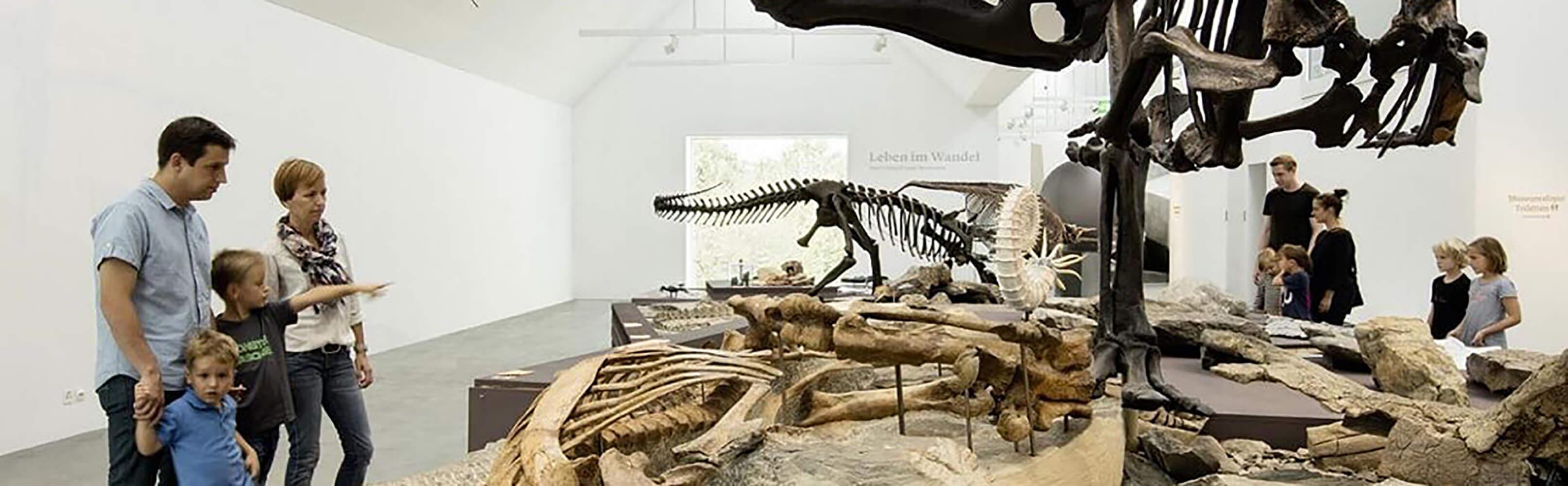 Naturmuseum St.Gallen 1