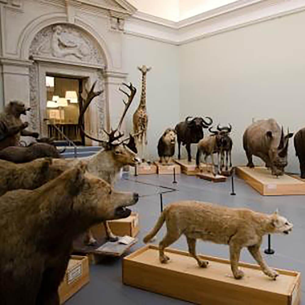 Musée cantonal de zoologie Lausanne