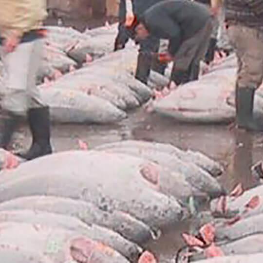 Vorschaubild zu Tsukiji-Fischmarkt