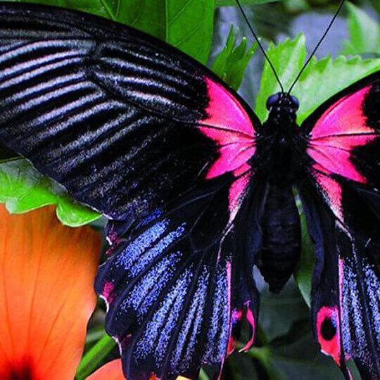 Insel Mainau - Die Blumeninsel im Bodensee 10