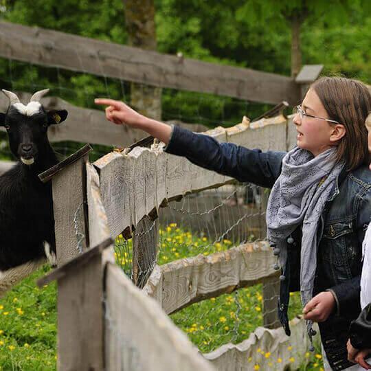 Urlaub auf dem Bauernhof - Kräuterhof im Bayerischen Wald 10