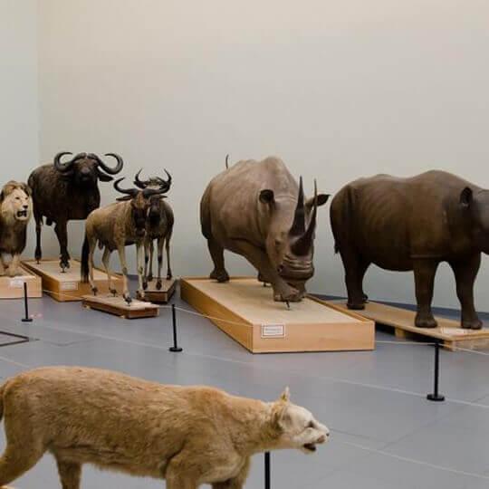 Musée cantonal de zoologie Lausanne 10