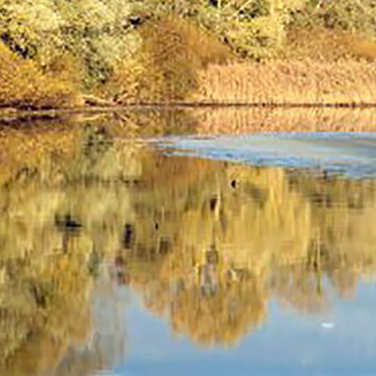 Vorschaubild zu La Grande Cariçaie - Naturschutzgebiet