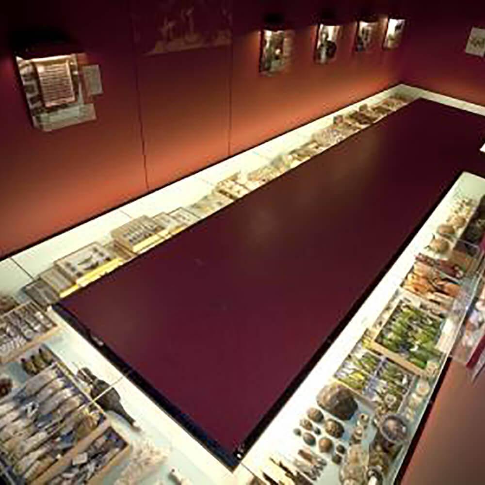 Naturhistorisches Museum der Burgergemeinde Bern
