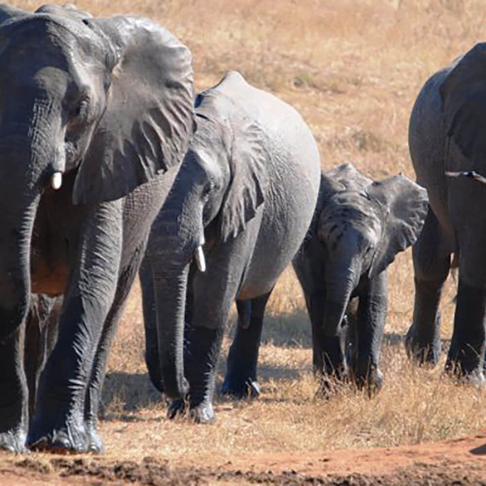 Jenman African Safaris - Ihr Abenteuer, unsere Kompetenz