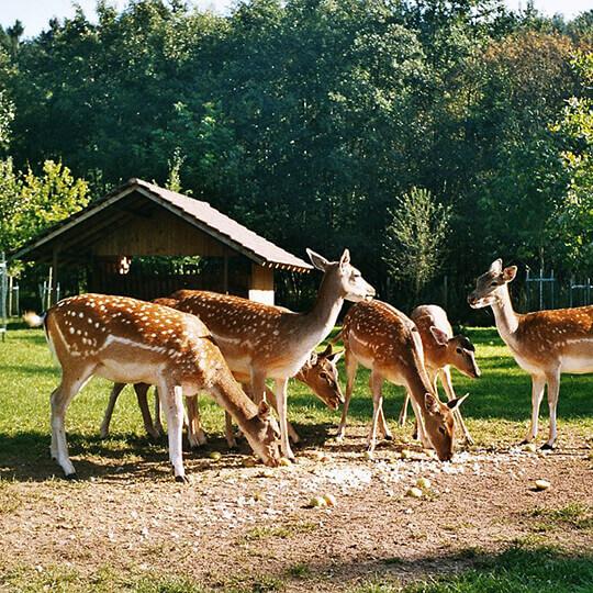 Affenberg Salem - Das besondere Tiererlebnis mit den Berberaffen 10