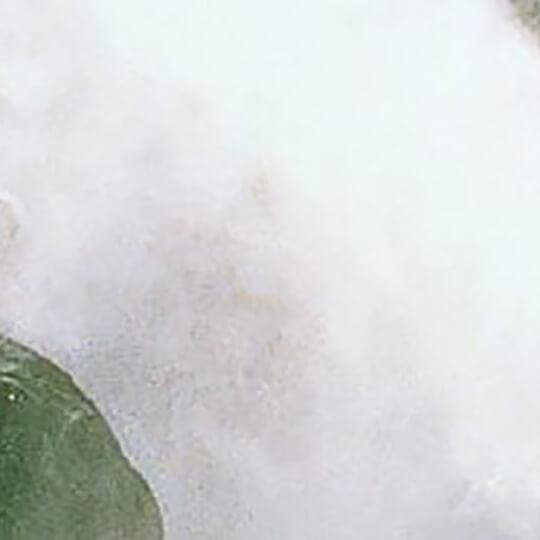 Vorschaubild zu WasserWunderWelt Krimml