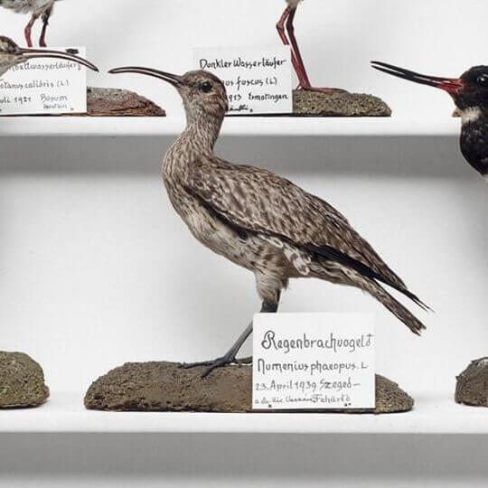 Stemmler Museum Schaffhausen 10