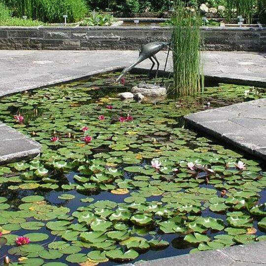 Botanischer Garten St. Gallen 10