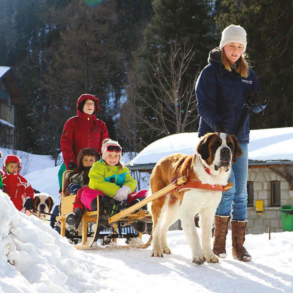 Vorschaubild zu Winterwanderung mit Barry, dem Schweizer Nationalhund